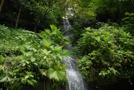 Cascade Panama1
