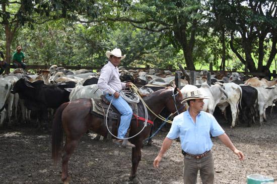 sortie_cheval2Panama