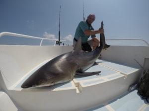 Bros requin bronze des cathédrales. Combat garanti!