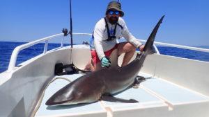 Requin bronze pour Stephane
